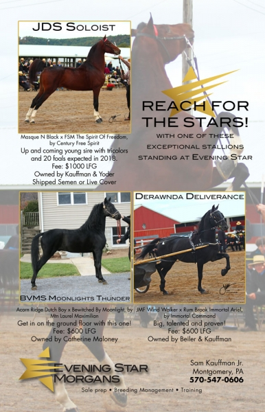 EveningStarStallionAd-Catalog