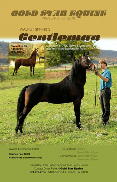 Walnut-Spring-Gentleman-Ad-GoldStar