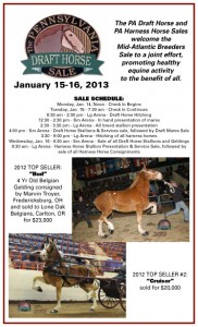 Pennsylvania Draft Horse Sale