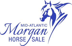 Mid-A Morgan Horse Sale